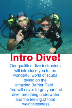 Introductory Dive