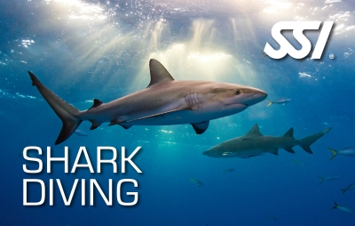 SSI Shark Diving Specialty
